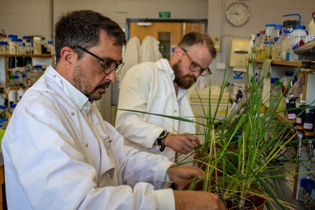 , Researchers Race to Make Barley Drought-Resistant